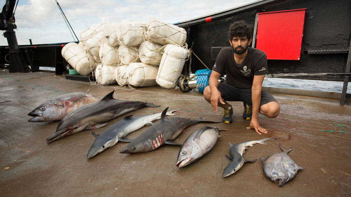 Sea Shepherd Launches New Campaign: Operation Driftnet - The Maritime Executive