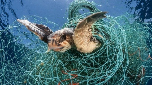 Call for Seafood Companies to Act on Ghost Gear