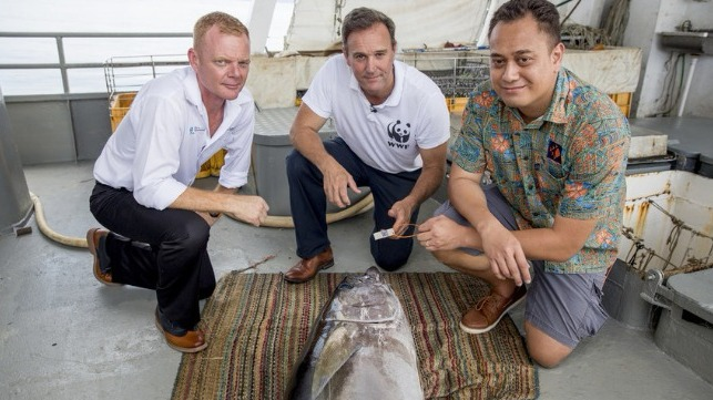 Image: Brett ?Blu? Heywood, SeaQuest Fiji CEO, Dermot O'Gorman WWF-Australia CEO and Ken Katafono, TraSeable Solutions CEO next to a yellowfin tuna about to be tagged with QR code. Fiji waters, December 2017.