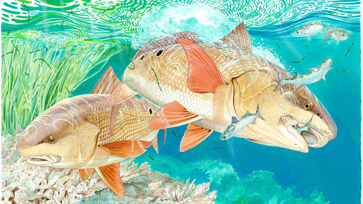 Guy Harvey: Big Plans for His Brand
