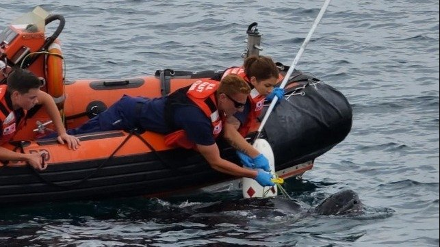 USCG saves a turtle tangled in a line