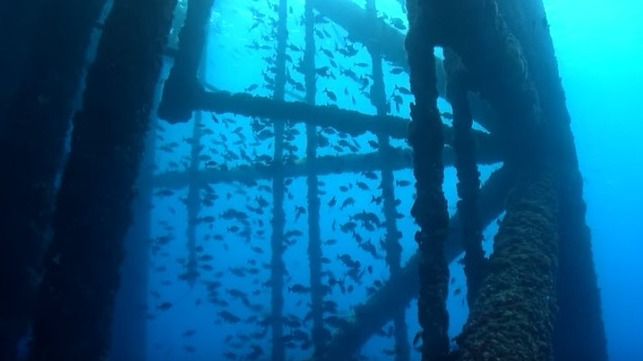 Cougar Platform Becomes Artificial Reef In Gulf Of Mexico