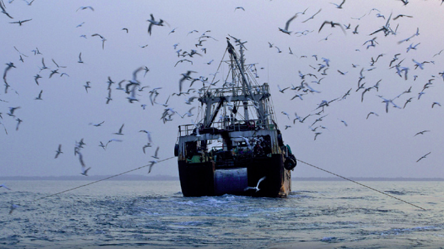 Study: Fisheries Compete with Shrinking Seabird Population for Food
